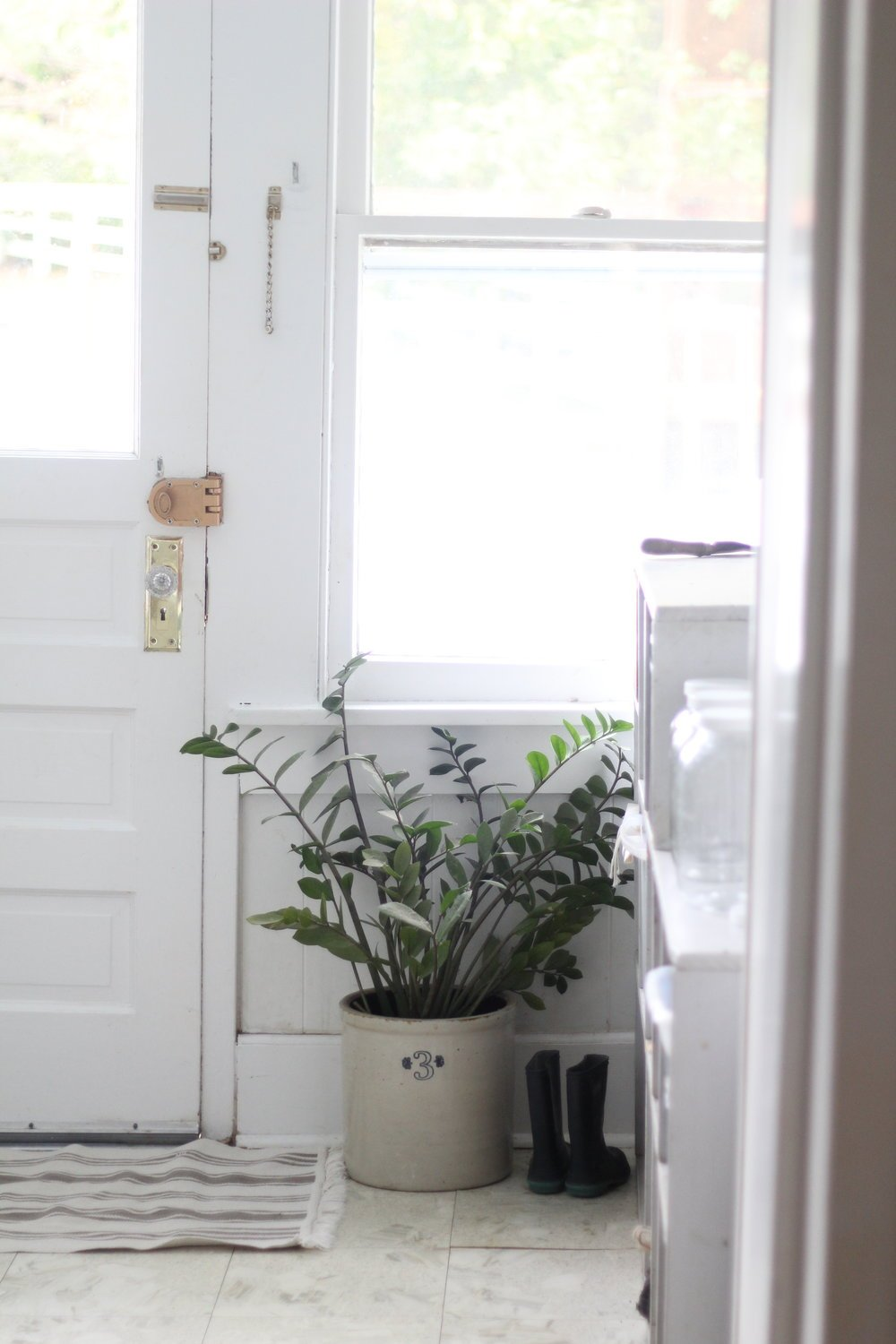 ikea rug at a back door mud room with a large plant to the right