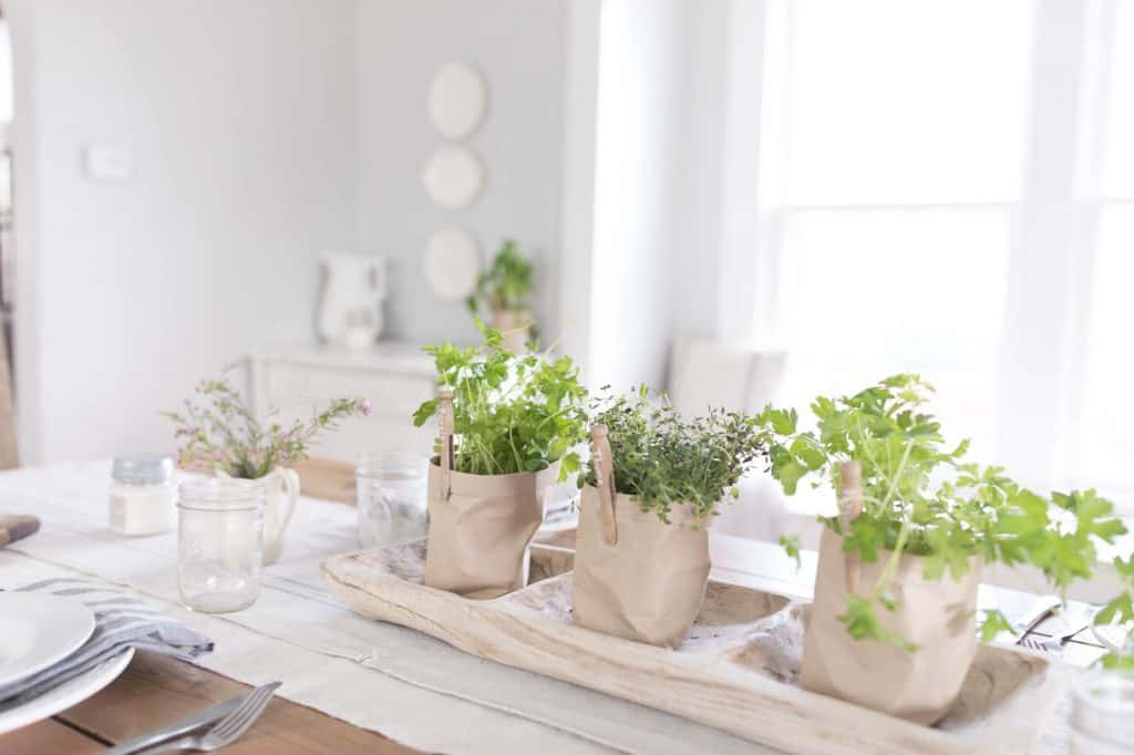 DIY Paper Pots potted herbs
