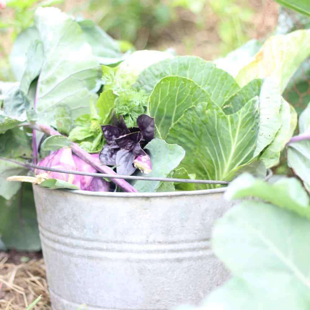 Garden Ideas Zone 6: Spring Garden Preparation Zone 6 Gardening