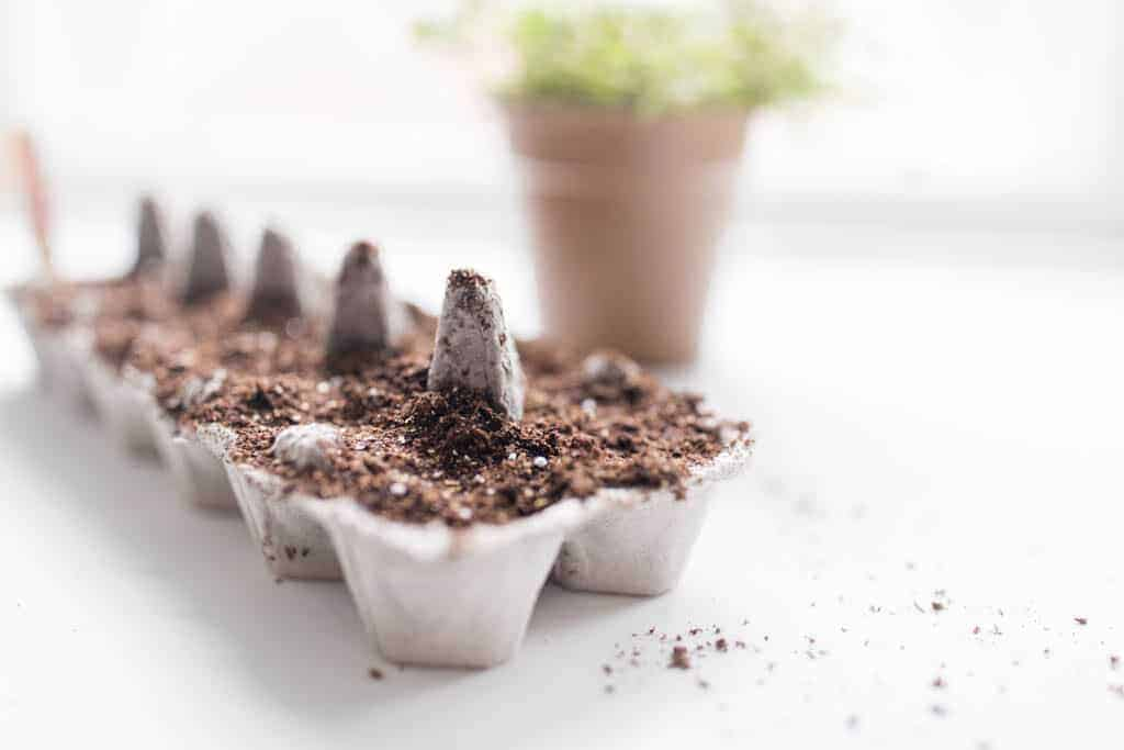 Zone 6 Gardening Starting Seeds indoors