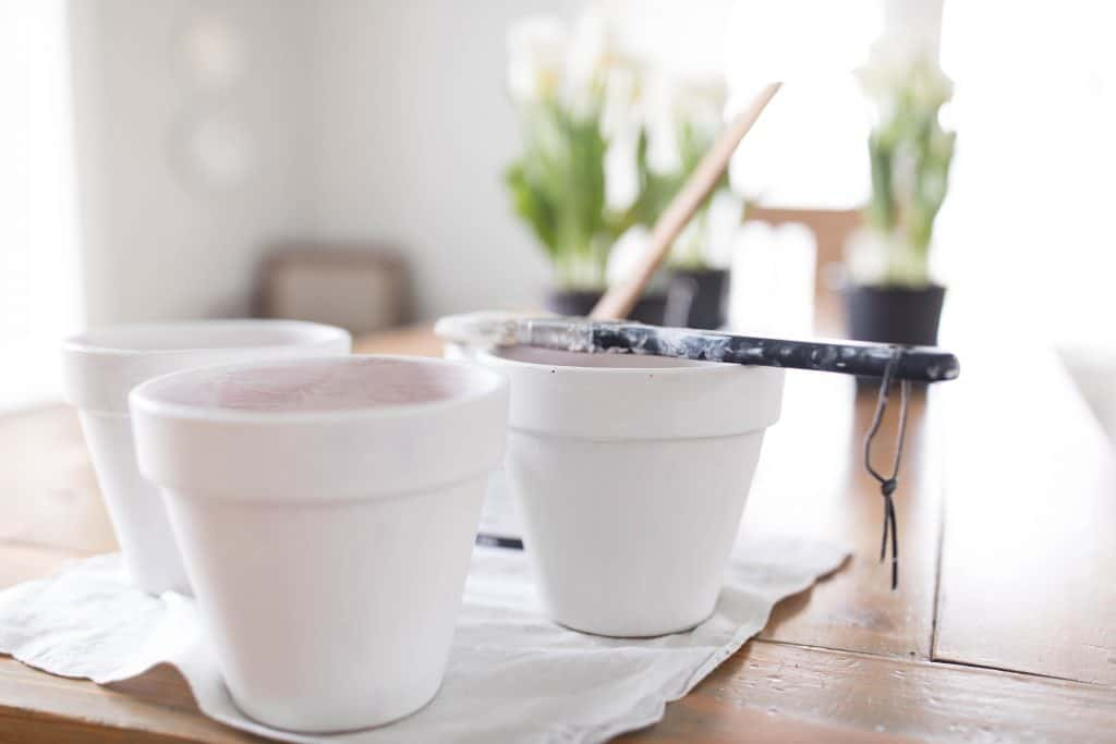 Chalk painted terra cotta pots for a simple potted tulip centerpiece