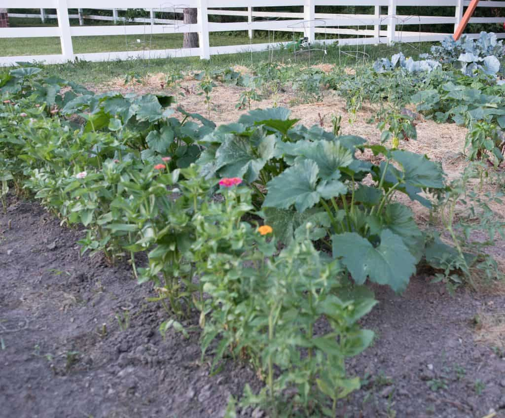 summer vegetable garden june garden tour farmhouse on boone zinnias
