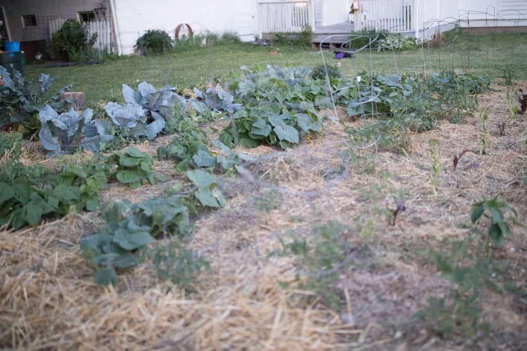 summer vegetable garden june garden tour farmhouse on boone