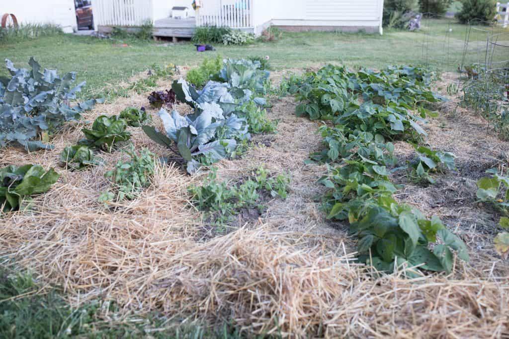 Summer vegetable garden june garden tour